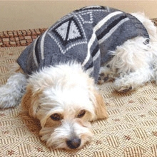 Handknit Alpaca Dog Sweater - Petite - Pick a Color