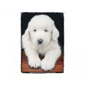 Very Super Cool Card #0352 White Puppy Praying
