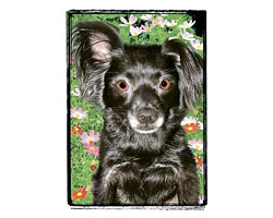 Very Super Cool Card #2261 Black Chihuahua