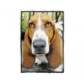 Very Super Cool Card #1909 Basset
