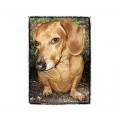 Very Super Cool Card #2711 Dachshund Smooth Red