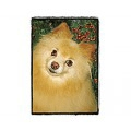 Very Super Cool Card #3411 Pomeranian
